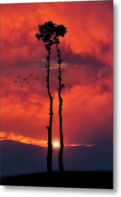 Two Oaks Together In The Field At Sunset Metal Print