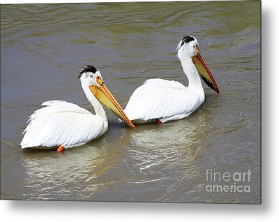 Metal Print featuring the photograph Two Pelicans by Alyce Taylor
