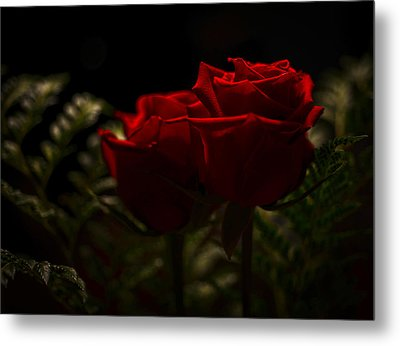 Two Roses For Our Anniversary Metal Print by Ronda Broatch