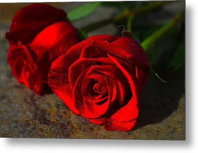 Metal Print featuring the photograph Two Roses by Richard Stephen