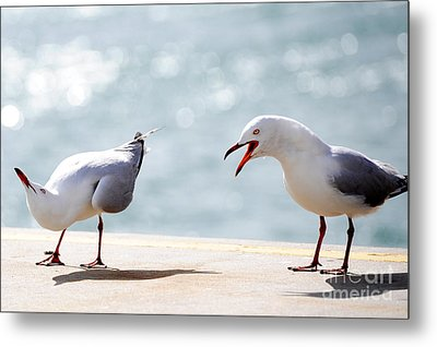 Two Seagulls Metal Print by Yew Kwang