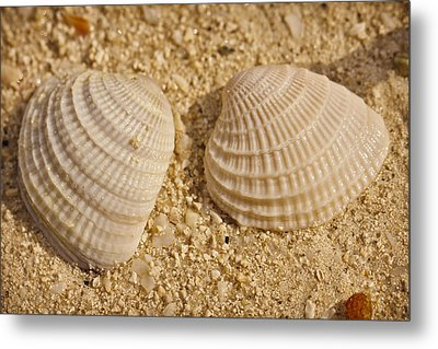 Two Shells Metal Print by Adam Romanowicz