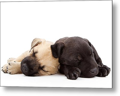 Two Sleeping Puppies Laying Together  Metal Print