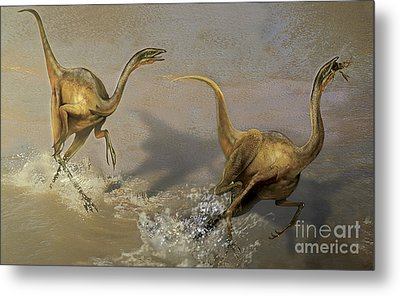 Two Struthiomimus Chasing Each Other Metal Print by Jan Sovak