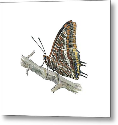 Two-tailed Pasha Butterfly, Artwork Metal Print