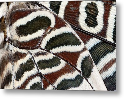 Two-tailed Pasha Butterfly Metal Print