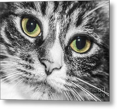 Two Toned Cat Eyes Metal Print by Jeannette Hunt
