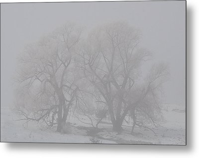 Two Trees Metal Print by BandC  Photography