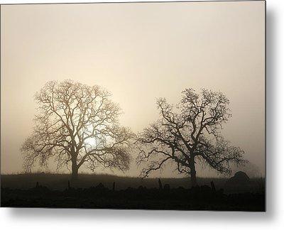Two Trees In Fog Metal Print