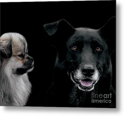 Two Types Of Mutts Metal Print by Nola Lee Kelsey