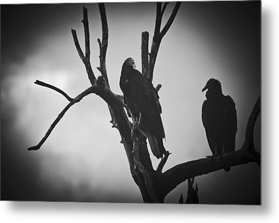 Metal Print featuring the photograph Two Vultures by Bradley R Youngberg