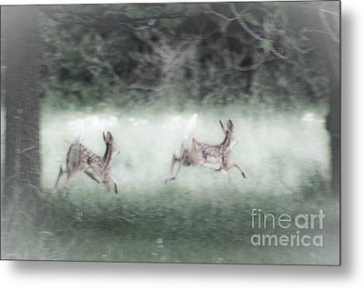 Metal Print featuring the photograph Two Whitetail Fawns Running by Jim Lepard