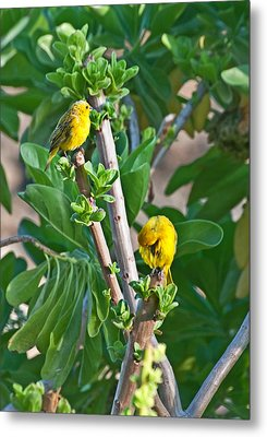 Two yellow canary birds in tree photograph by valerie garner - Valerie garnering ...