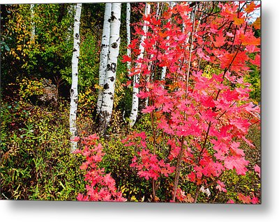 Uinta Colors Metal Print by Chad Dutson