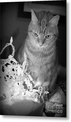 Unamused Metal Print by Barbara Bardzik