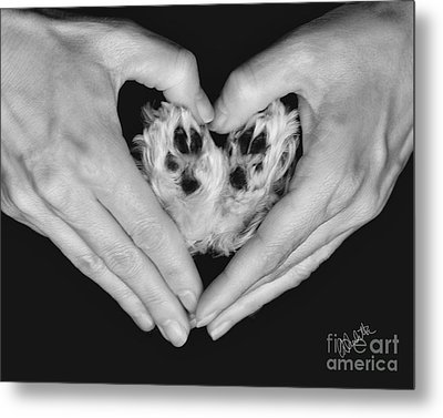 Unconditional Love Metal Print by Andrea Auletta