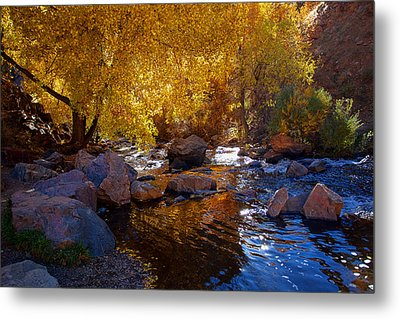 Under A Gold Canopy Metal Print by Jim Garrison