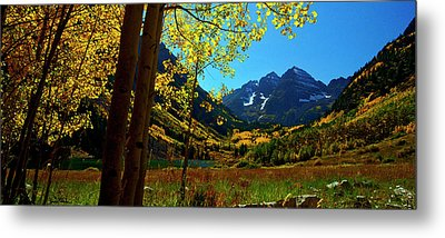 Under Golden Trees Metal Print by Jeremy Rhoades