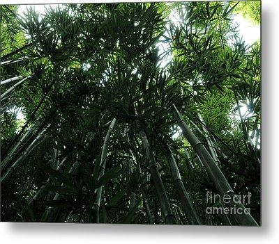 Under The Bamboo Haleakala National Park  Metal Print by Vivian Christopher