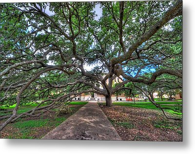Under The Century Tree Metal Print