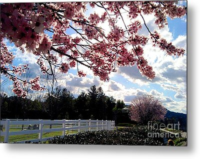 Under The Cherry Blossom Metal Print