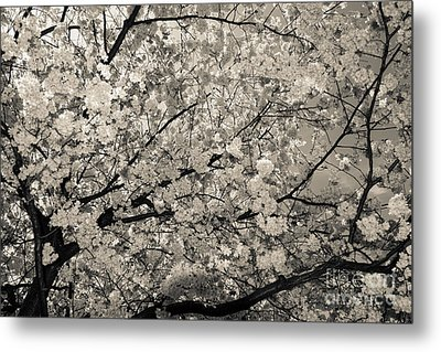 Under The Cherry Tree - Bw Metal Print by Hannes Cmarits