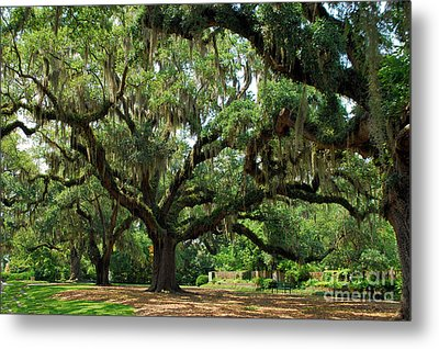 Metal Print featuring the photograph Under The Oaks by Bob Sample