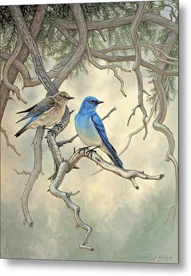 Under The Old Juniper-mountain Bluebirds Metal Print by Paul Krapf