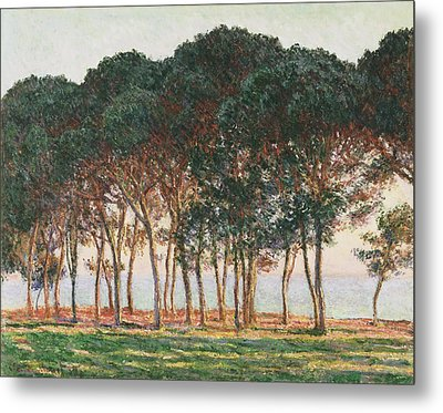 Under The Pines. Evening Metal Print by Claude Monet