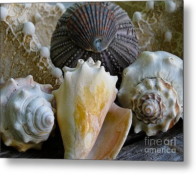 Under The Sea Metal Print by Colleen Kammerer