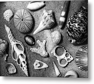 Under The Sea Metal Print by Tom Druin