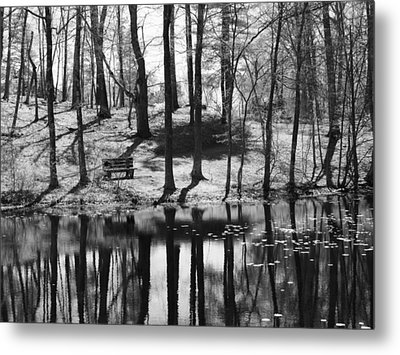 Under The Tall Trees Metal Print by Luke Moore