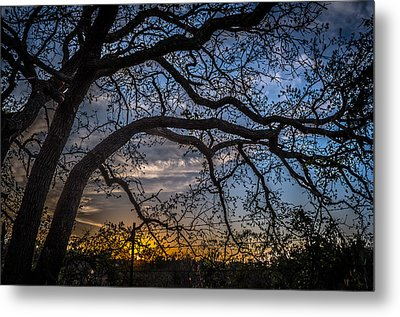 Under The Tree And Through The Fence Metal Print by Kelly Kitchens
