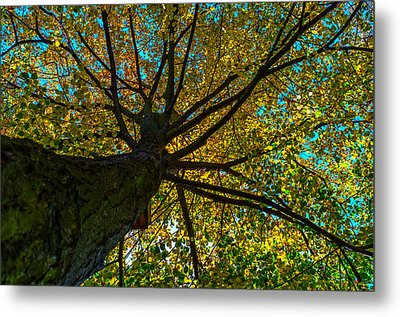 Under The Tree S Skirt Metal Print by Tgchan