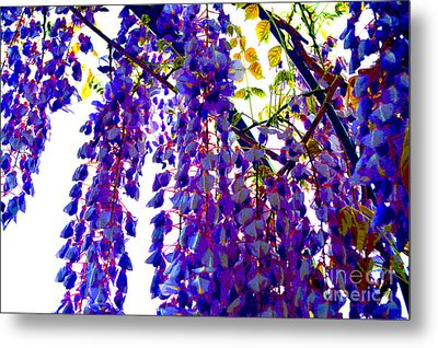 Under The Wisteria Metal Print by Alys Caviness-Gober
