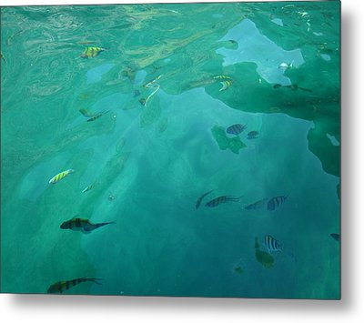 Underwater - Long Boat Tour - Phi Phi Island - 011314 Metal Print by DC Photographer