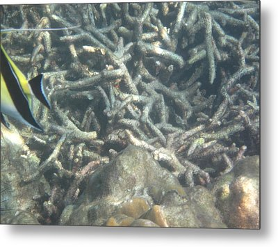Underwater - Long Boat Tour - Phi Phi Island - 011334 Metal Print by DC Photographer