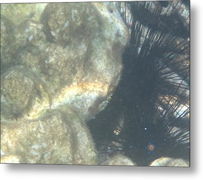 Underwater - Long Boat Tour - Phi Phi Island - 011344 Metal Print by DC Photographer