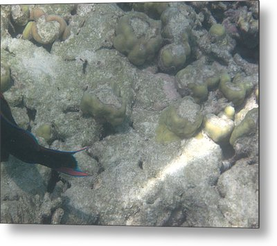 Underwater - Long Boat Tour - Phi Phi Island - 011361 Metal Print by DC Photographer