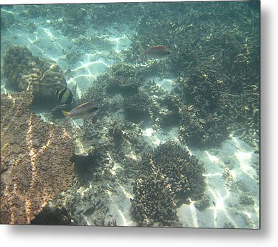 Underwater - Long Boat Tour - Phi Phi Island - 011377 Metal Print by DC Photographer