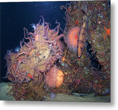 Metal Print featuring the photograph Underwater Sea Life by Christine Drake