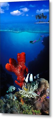 Underwater View Of Sea Anemone Metal Print by Panoramic Images