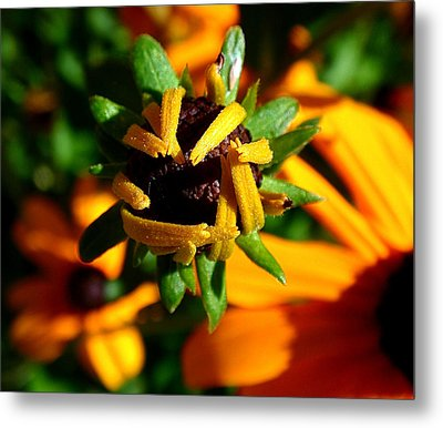 Unfolding Metal Print by Rona Black