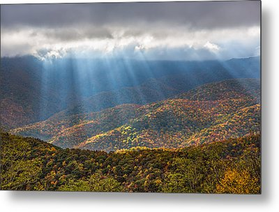 Unfurled Autumn Splendor Metal Print by Carl Amoth