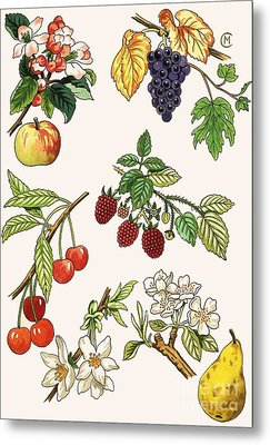 Unidentified Montage Of Fruit Metal Print by English School