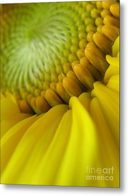 Unity Photography Metal Print