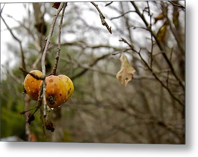 Metal Print featuring the photograph Unpicked by Alice Mainville
