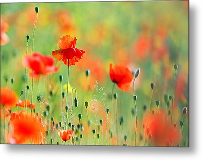 Untited Colours Of Summer  Metal Print by Roeselien Raimond