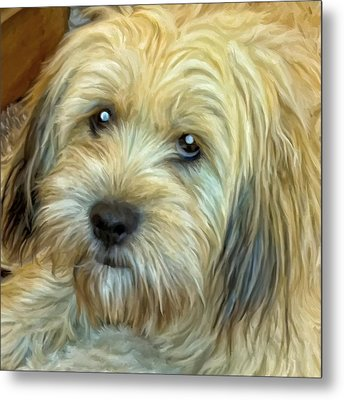 Chewy Metal Print by Michael Pickett