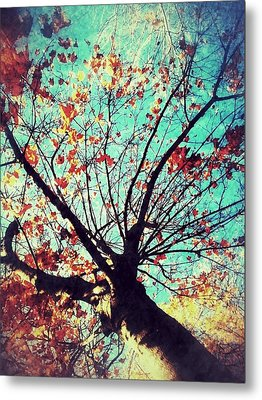 Untitled Tree Web Metal Print by Juliann Sweet